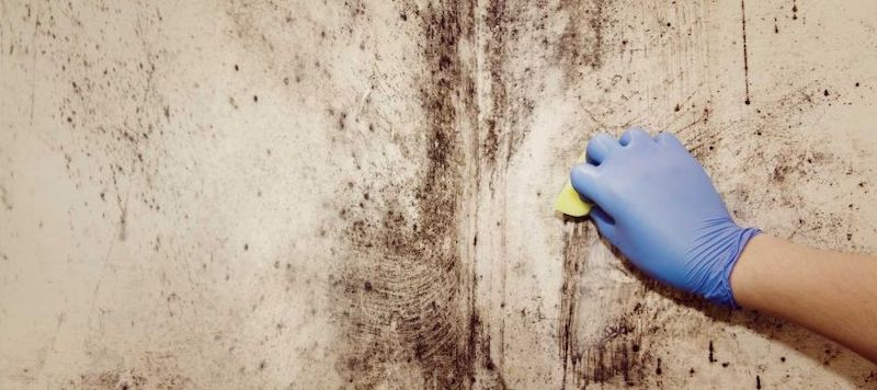 Mold Removal in Greenbush, MI (3793)