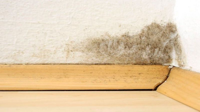 Mold Removal in Summit, MI (6309)