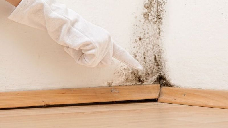 Mold Cleanup in Riley, MI (5318)