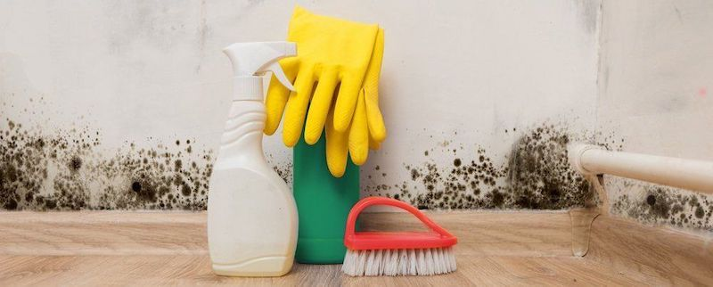 Mold Cleanup in Hastings (Charter Township), MI (1130)