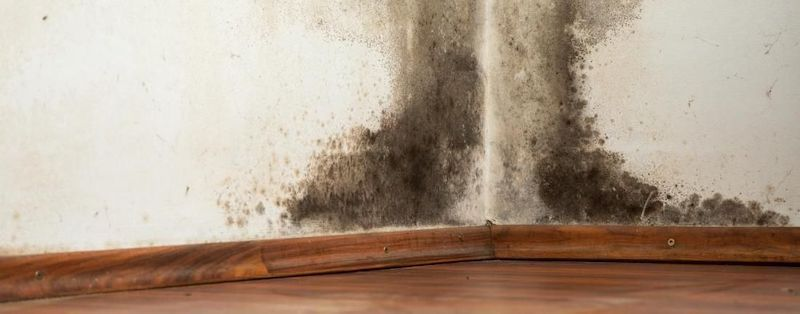 Mold Cleanup in Irving, MI (5762)